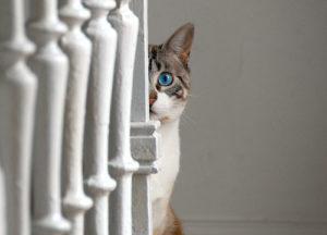 迷子の犬猫を発見…どうしたらいい?
