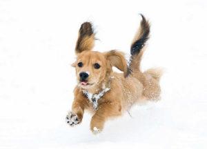 犬の体調不良を見分けるチェックポイント