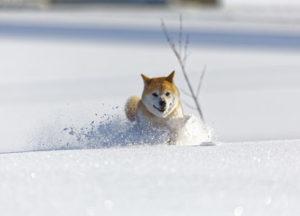 寒い冬の過ごし方。寒さ対策を考えよう!