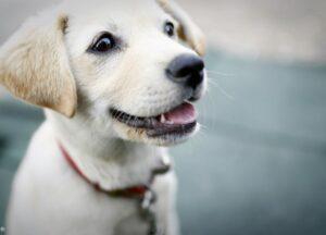 犬のお散歩中のマナーについて(part.2)