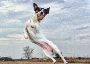 遊ばない犬か遊べない犬か